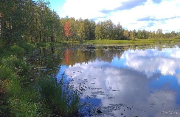 Зв несколько дней до осени Природа Ухты и Коми Ухта
