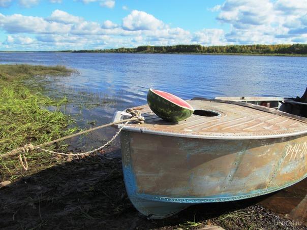 у меня на лодке пол арбуза на лодке выросло, хрен знает че за сорт, говорят ...здабольский какой то Разное Ухта