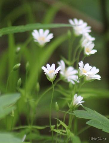 Маленькие и нежные Природа Ухты и Коми Ухта