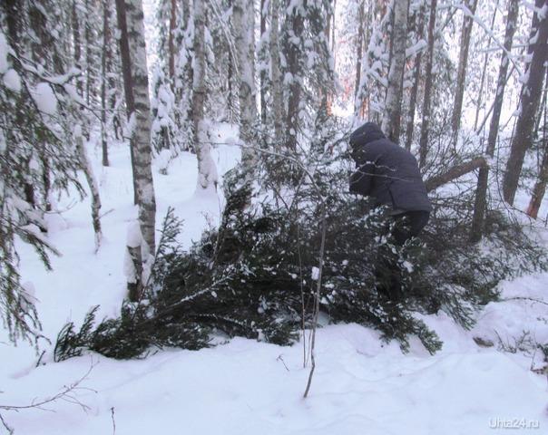 пора топор поточить, скоро елку рубить Природа Ухты и Коми Ухта