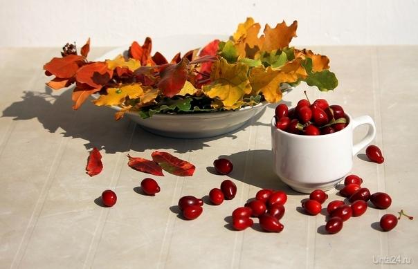 Натюрморт с осенними листьями и кизилом Разное Ухта