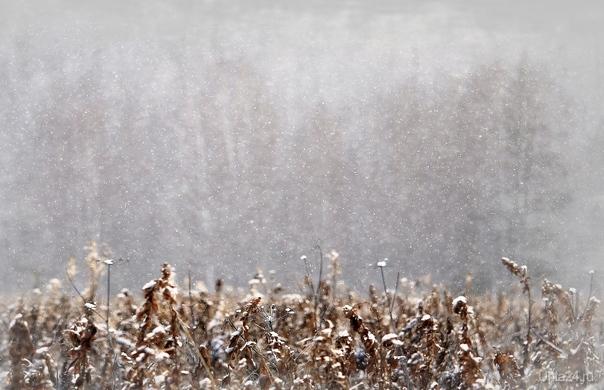 Снежно Природа Ухты и Коми Ухта