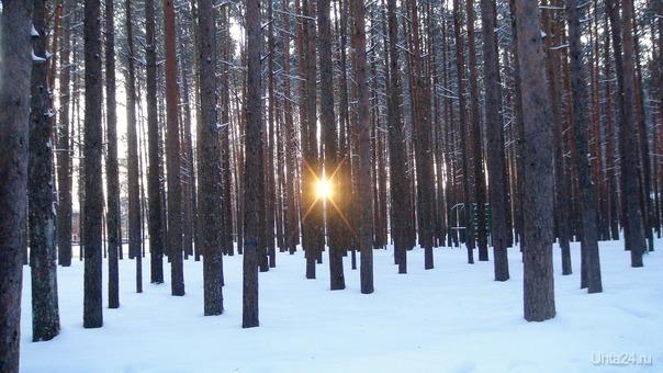 Зимнее утро.  Мороз и солнце; день чудесный! Еще ты дремлешь, друг прелестный — Пора, красавица, проснись: Открой сомкнуты негой взоры Навстречу северной Авроры,  Звездою севера явись!   Вечор, ты помнишь, вьюга злилась, На мутном небе мгла носилась; Луна, как бледное пятно, Сквозь тучи мрачные желтела, И ты печальная сидела  — А нынче… погляди в окно:   Под голубыми небесами Великолепными коврами, Блестя на солнце, снег лежит; Прозрачный лес один чернеет, И ель сквозь иней зеленеет,  И речка подо льдом блестит.   /Александр Сергеевич Пушкин/ Природа Ухты и Коми Ухта