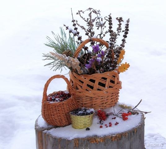 Зимний натюрморт Разное Ухта