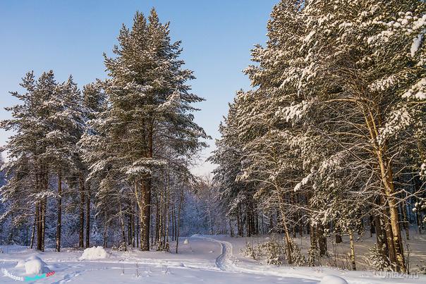Зима в своих правах Природа Ухты и Коми Ухта