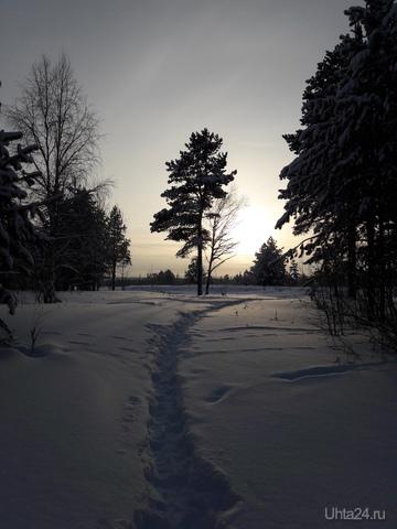 Помещаю свое фото с красивой зимней сНежностью, с моей лесной прогулки.  Природа Ухты и Коми Ухта