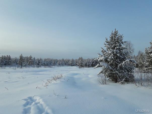 Какая же красивая наша северная природа! На прогулке надо ее обязательно сфокать, и поделиться.  Природа Ухты и Коми Ухта