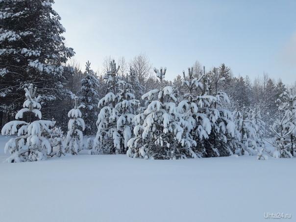 Зимушка-зима, много снега принесла! Природа Ухты и Коми Ухта