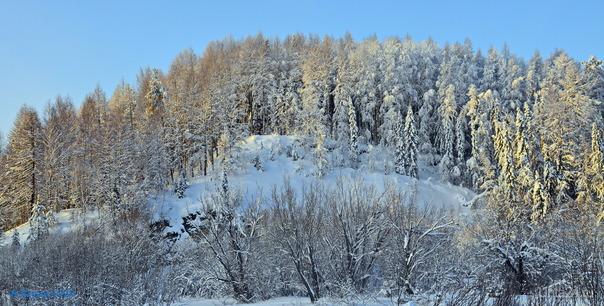 Морозный денёк.. Природа Ухты и Коми Ухта