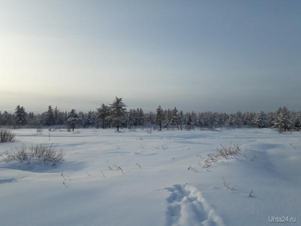 Зимние прогулочки. Природа Ухты и Коми Ухта