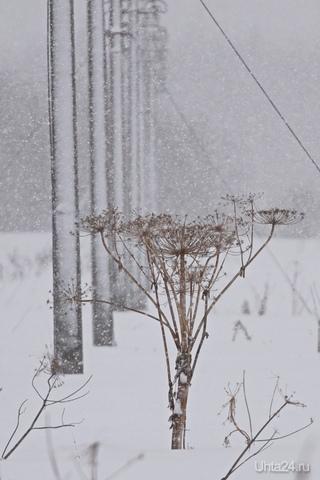 Мартовский снегопад Природа Ухты и Коми Ухта