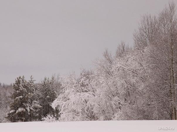 После снегопада Природа Ухты и Коми Ухта