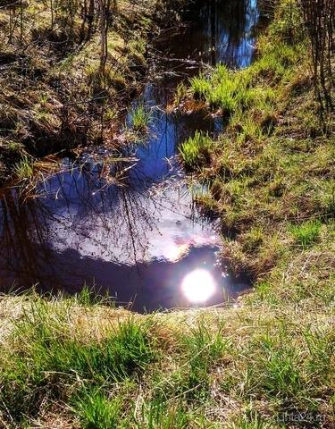 Природа создает забавные сюжеты. Лишь нужно посмотреть туда, где только грязь и мутная вода. (Из инета) Природа Ухты и Коми Ухта
