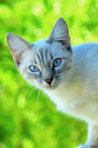 Кошка Питомцы Ухта