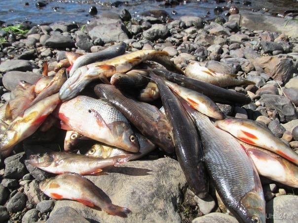 печора,рыба,соль,ветер,солнце,свету рыбачку целую на реке,она на вкус и запах как русалка,тьфу Природа Ухты и Коми Ухта