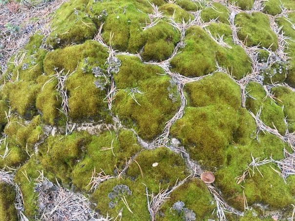 Мох. Просто мох.  Природа Ухты и Коми Ухта