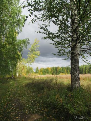 Какая же красота в осеннем лесу! Благодать! Природа Ухты и Коми Ухта
