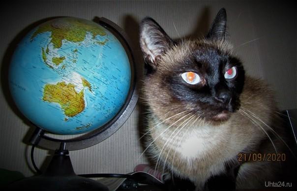 Кошка..которая гуляет сама по себе....думу думает...куда бы удрать..да подальше... Питомцы Ухта