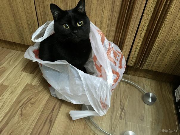 Пакетики наше ФсЁ)))) Питомцы Ухта