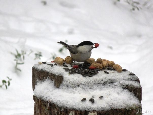Гаечка с орешком. Природа Ухты и Коми Ухта