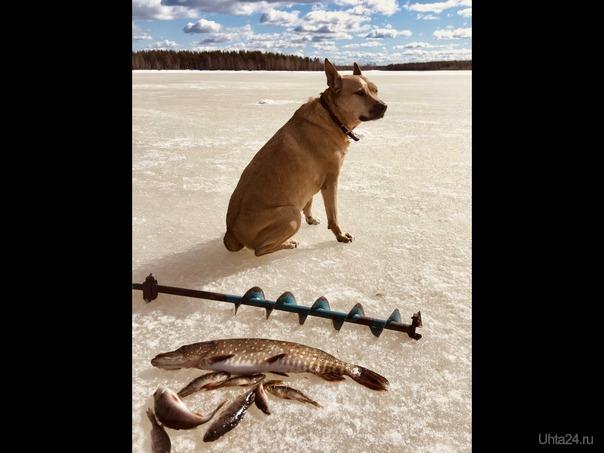 Боня на рыбалке) Разное Ухта