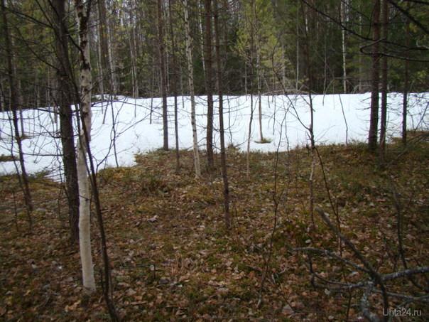 Граница зима-лето. Природа Ухты и Коми Ухта