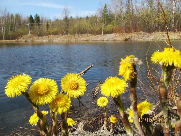 Солнечно у пруда. Природа Ухты и Коми Ухта