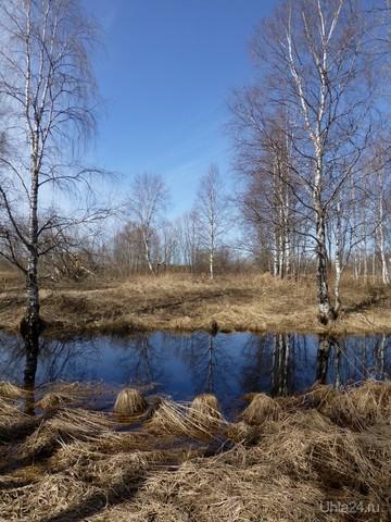 Люблю отражение деревьев в воде! Природа Ухты и Коми Ухта