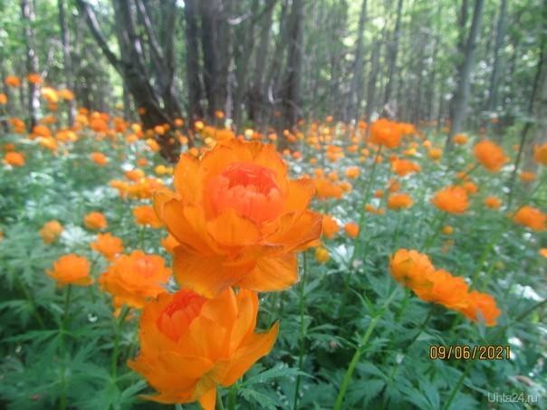 Красота леса.. Природа Ухты и Коми Ухта