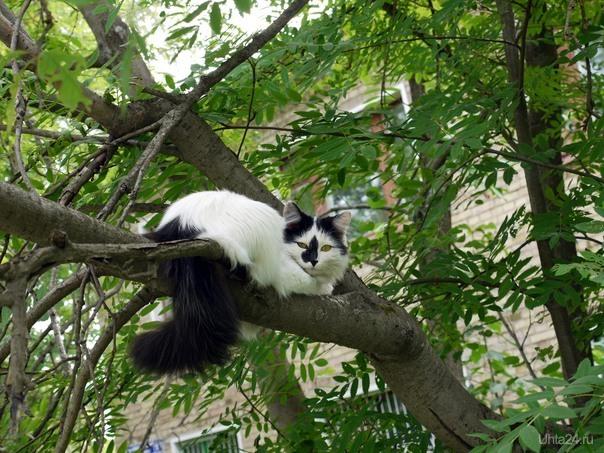 Кошак отдыхает Питомцы Ухта