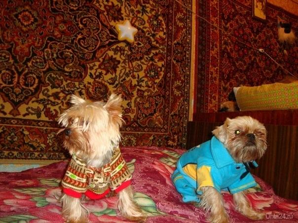 модные парни Питомцы Ухта
