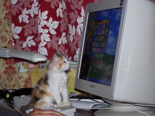 Котёнок и монитор. Питомцы Ухта