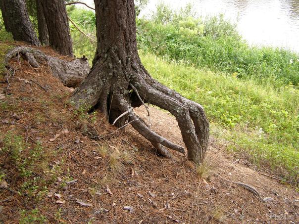 Сангородок.Курья ножка... Природа Ухты и Коми Ухта