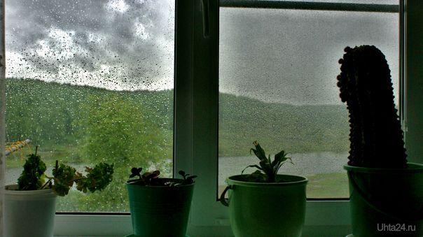 А за окном - лето...Там хорошо... Природа Ухты и Коми Ухта