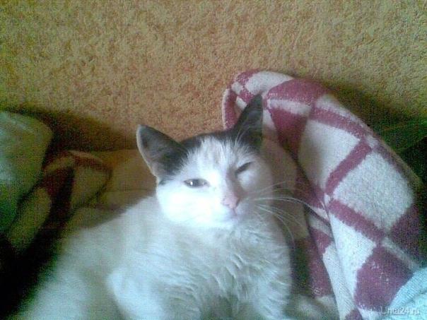 По улице Сенюкова найдена черно-белая гладкошерстная кошка. Ухожена и ласкова. Ночью у нее родился котенок.  Хозяевам или кто хочет забрать животных звонить по телефону 89041099169. Отдам безвозмездно. Питомцы Ухта