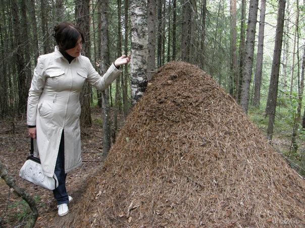 Вот такой лесной домик. Природа Ухты и Коми Ухта