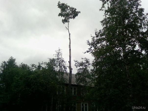 В г. Ухте есть пальма Природа Ухты и Коми Ухта