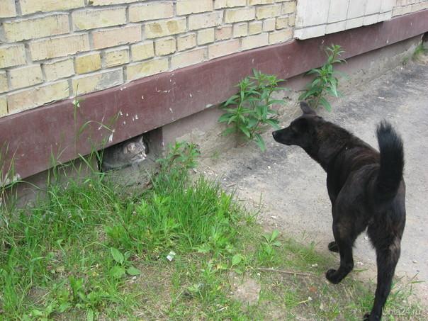2010г. Кот и Пес. Питомцы Ухта