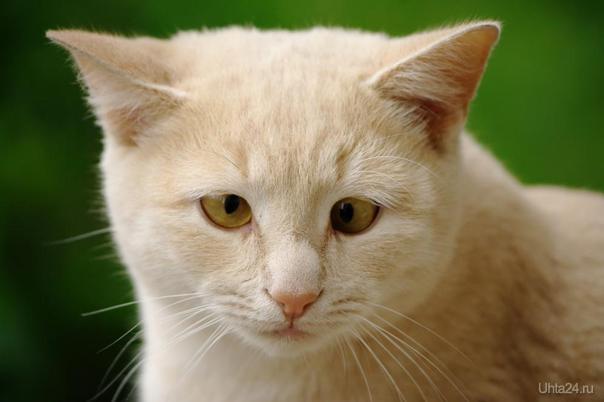 Просто кот Питомцы Ухта