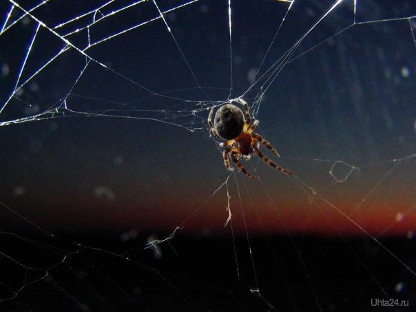 паучок - светлячок Природа Ухты и Коми Ухта