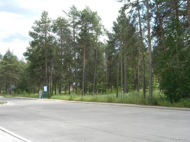 Участок леса в п.Шудаяг,который планируется вырубить и построить на этом месте 2 многоэтажки. Природа Ухты и Коми Ухта