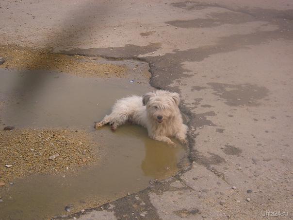 грязевые ванны Питомцы Ухта