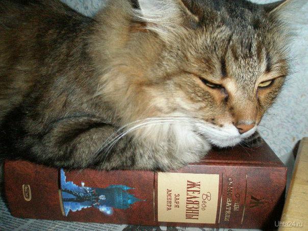 кот-книголюб Питомцы Ухта