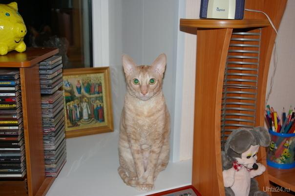 любимый кот Аркадий Питомцы Ухта