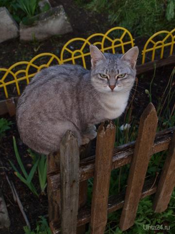 Кошка Ласка - мудрая и независимая. Питомцы Ухта