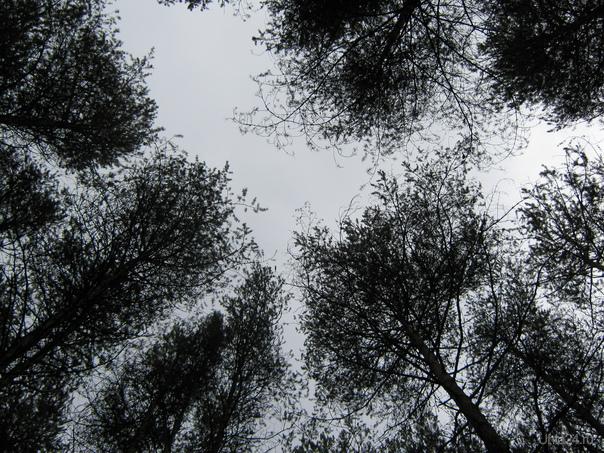 Часто мы смотрим под ноги, постоянно - вперёд, но редко - вверх. Природа Ухты и Коми Ухта