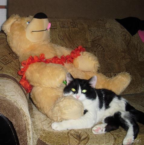 Мой кот Федор, ему уже 19 лет! Питомцы Ухта